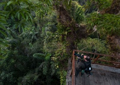 Looking over the rainforest canopy